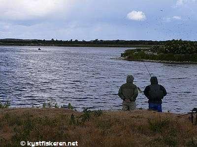 søen omkring aqua